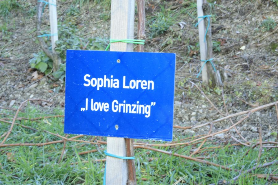 4CITIES Sophia Loren Vienna vine